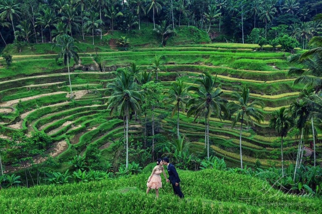 ubud rice terrace prewedd